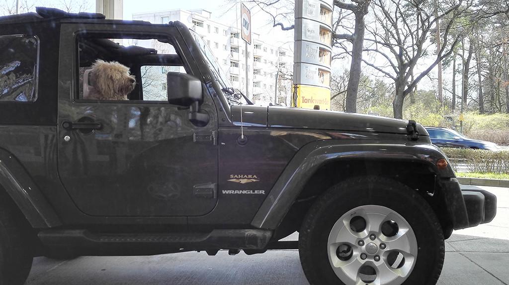mietwagen krise mit hund